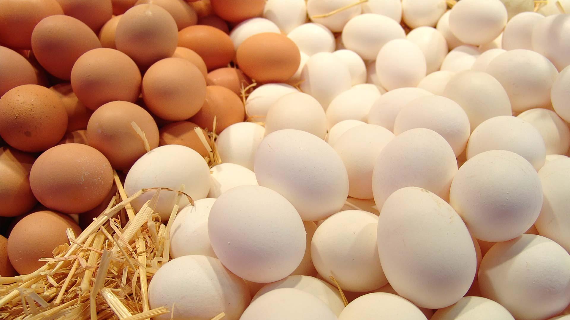 Свежее яйцо от производителя